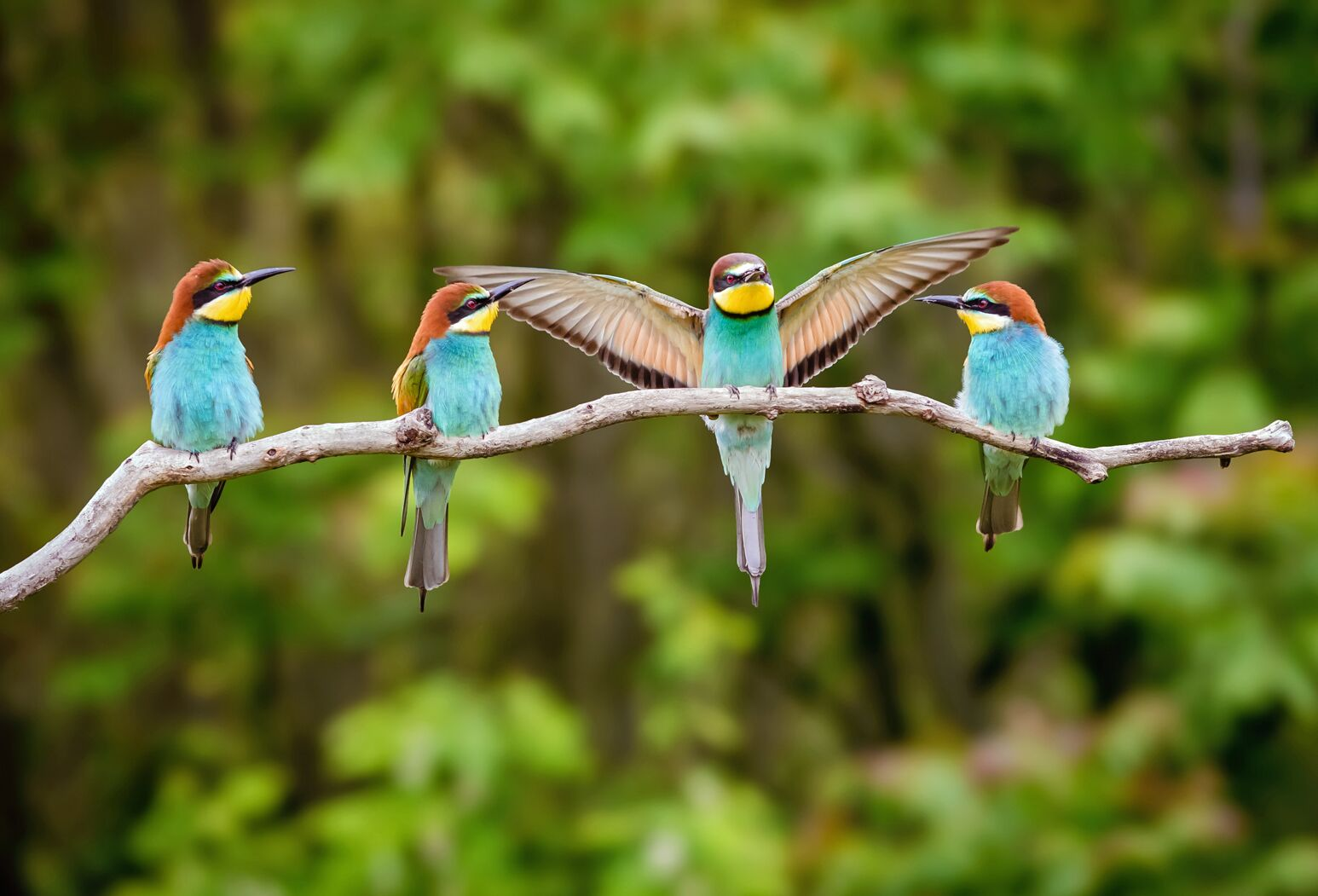Birds on a tree branch